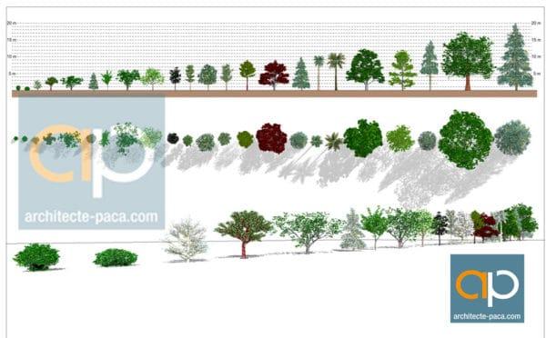 Familles d'Arbres REVIT - végétation 3D